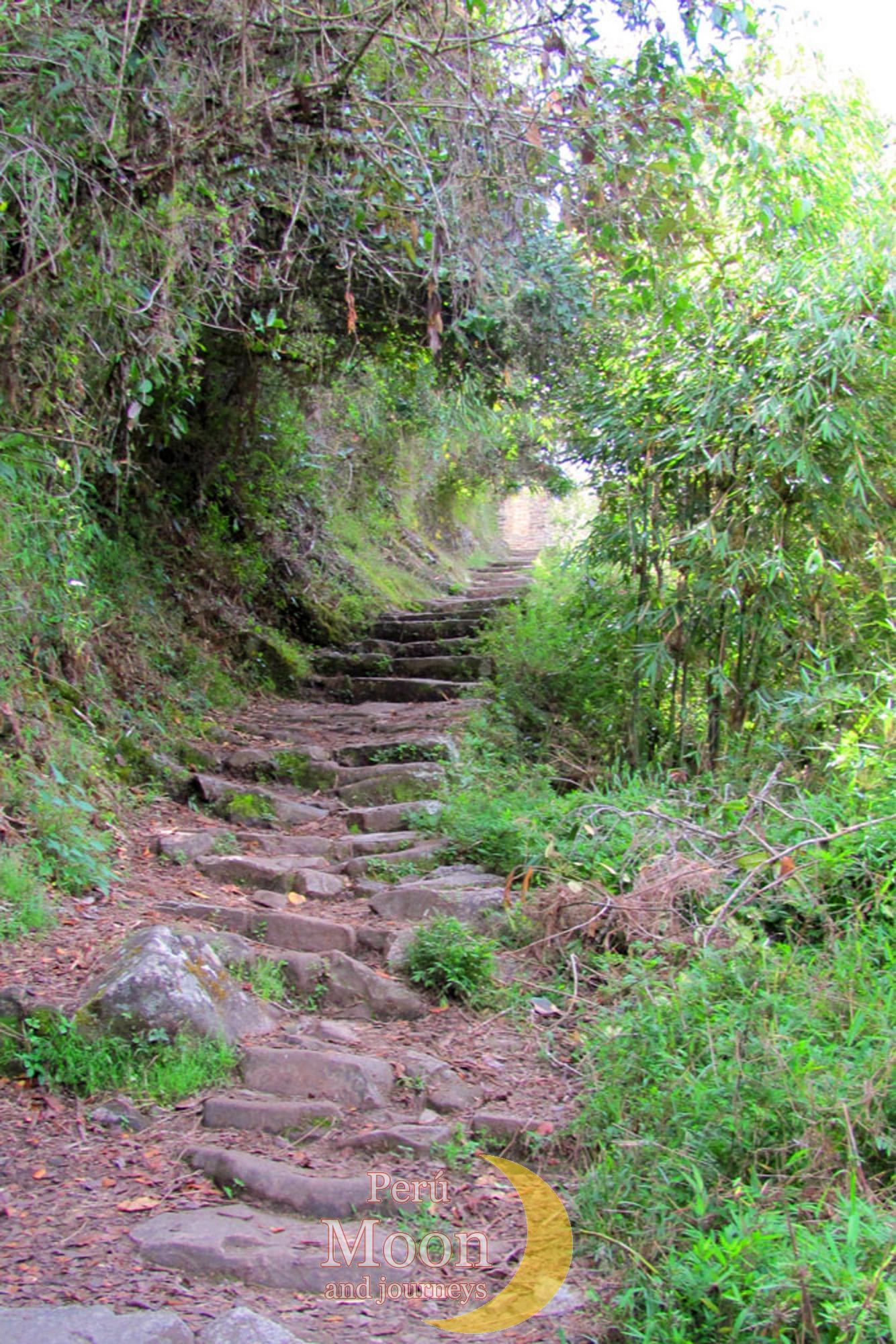 The Inca Trail 8